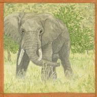 Discussions, January 22, 2018, 01/22/2018, The Elephant Map Project: Cartography as Stewardship
