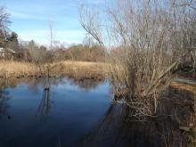 Hikes, February 11, 2018, 02/11/2018, Unforgotten Wetlands Megawalk