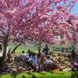 Festivals, April 21, 2018, 04/21/2018, Cherry Blossom Festival