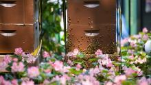 Workshops, June 28, 2019, 06/28/2019, Beekeeping Workshop