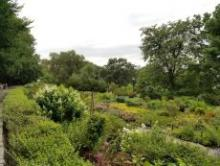 Tours, July 07, 2019, 07/07/2019, What's in Bloom in the Heather Garden? July Tour