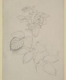 Workshops, January 22, 2019, 01/22/2019, Plant Drawings