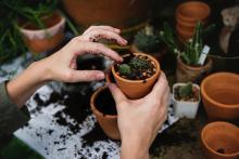 Workshops, March 14, 2019, 03/14/2019, Getting Ready For Gardening Season