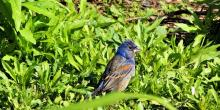 Birdwatchings, May 21, 2019, 05/21/2019, Spring Migration Bird Walk