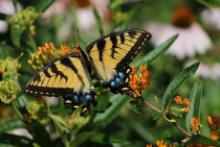 Tours, June 02, 2019, 06/02/2019, Butterflies and Botany Tour