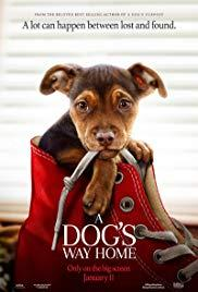 Films, June 15, 2019, 06/15/2019, A Dog's Way Home (2019): Animal Adventure with Ashley Judd, Edward James Olmos (Outdoors)