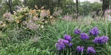 Workshops, June 29, 2019, 06/29/2019, Summer Ornamental Plants Workshop
