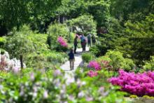 Tours, July 28, 2019, 07/28/2019, Midsummer Botany Walk