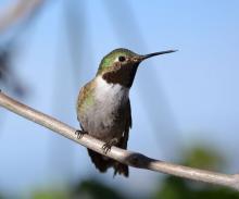 Birdwatchings, September 22, 2019, 09/22/2019, The New York City Naturalist Club: Fall Migration