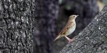 Birdwatchings, September 24, 2019, 09/24/2019, Bird Walk at The Battery