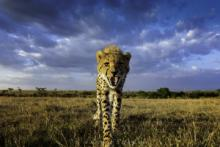 Slide Lectures, February 26, 2020, 02/26/2020, African Photographic Safaris from A to Z