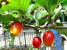 Park Walks, August 08, 2020, 08/08/2020, Foraging Tour (in-person): elderberries, peaches, gourmet mushrooms, cherries