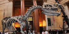 Museumss, September 09, 2020, 09/09/2020, American Museum of Natural History is Now Open!