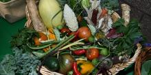 Fairs, September 26, 2020, 09/26/2020, Harvest Fair: Workshops on Gardening, Cooking and More (virtual)
