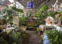 Tours, December 03, 2020, 12/03/2020, Holiday Plants and How To Care For Them (virtual)