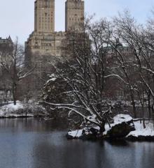 Park Walks, March 10, 2021, 03/10/2021, Central Park Walk (virtual)