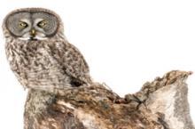 Workshops, February 16, 2021, 02/16/2021, Wildlife and Nature Photography (virtual)