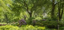 Park Walks, April 28, 2021, 04/28/2021, Central Park Walk:Olmsted Flower Bed (virtual)