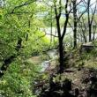 Park Walks, May 01, 2021, 05/01/2021, (IN-PERSON) Foraging Tour in Central Park: Wild Salad Greens, Mushrooms, Wild Allspice and More