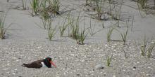 Birdwatchings, June 05, 2021, 06/05/2021, (IN-PERSON, outdoors) Rock the Birds