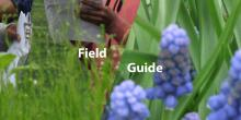 Workshops, June 05, 2021, 06/05/2021, (IN_PERSON, outdoors) Field Guide: Art, Ecology, and Mindfulness Auditory Workshop