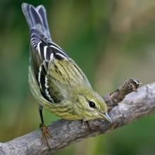 Birdwatchings, September 14, 2021, 09/14/2021, Morning Bird Walk in the Park