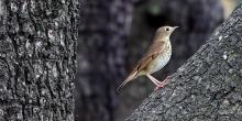 Birdwatchings, October 13, 2021, 10/13/2021, Guided Bird Walk