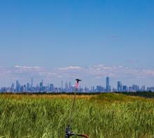 Discussions, November 08, 2021, 11/08/2021, The Grasslands Birds of Freshkills Park (online)
