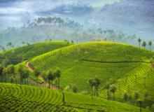 Tours, October 13, 2021, 10/13/2021, ***CANCELLED  India's Munnar: Natural Beauty and Tea Plantations (livestream)