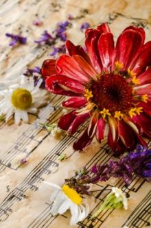 Concerts, March 27, 2018, 03/27/2018, Works by Liszt, Schumann and more